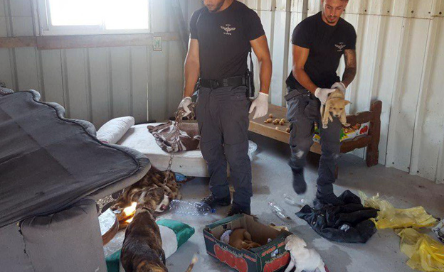 """הגיעו לחפש אמל""""ח - וחשפו מתחם התעללות (צילום: דוברות המשטרה)"""