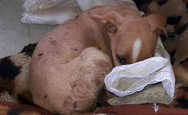 הכלבים במקום סבלו מהזנחה קשה (צילום: דוברות המשטרה)