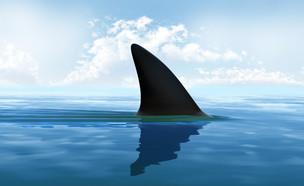 כריש (אילוסטרציה: Tatiana Shepeleva, Shutterstock)