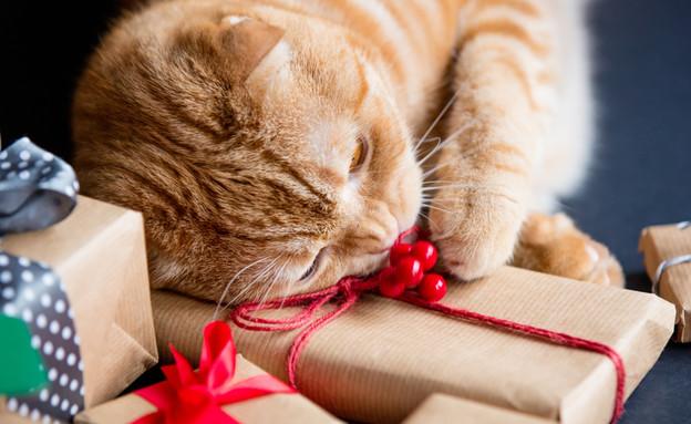 מתנה לחתול (צילום: SimonVera, Shutterstock)