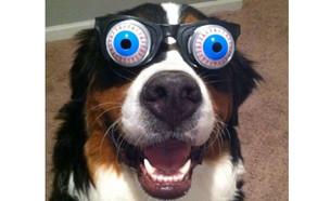 כלב מצחיק (צילום: צילום מסך, מעריב לנוער)