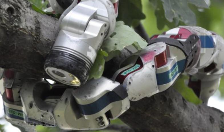 נחש רובוטי (צילום: יחסי ציבור)