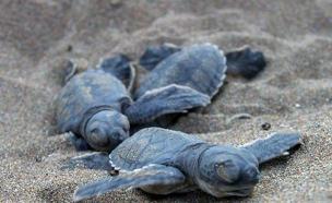צבי הים, שורדים את הבקיעה, מתים בים (צילום: SKY NEWS)