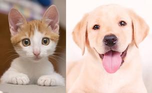 כלב וחתול (צילום: tnv, Shutterstock)
