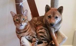 כלב וחתול (צילום: boredpanda, מעריב לנוער)