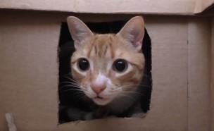 מבוך חתולים (צילום: יחסי ציבור)