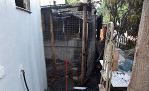 כלוב התוכים השרוף (צילום: דוברות המשטרה)