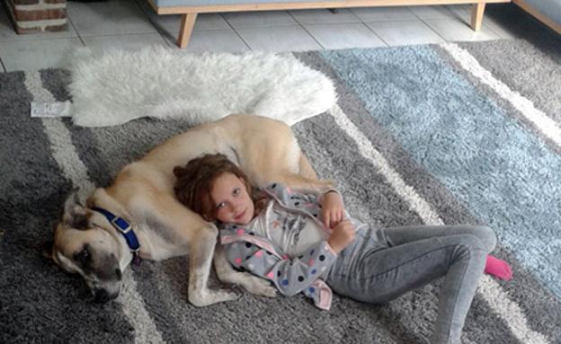 הכלבה שננטשה (צילום: באדיבות המשפחה)
