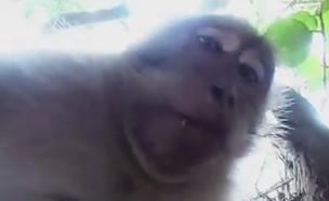 קוף גונב מצלמה (צילום: יחסי ציבור)
