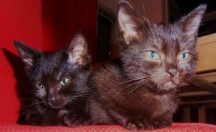 החתולים שלא נתנו להומו לאמץ (צילום: מתוך פייסבוק)