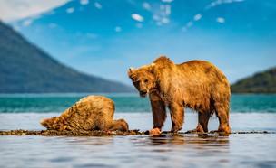 הטבע הפראי של אלסקה (צילום: עידו פאלח)