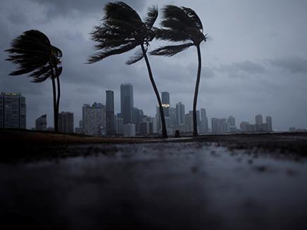 מאות עצים קרסו, פלורידה