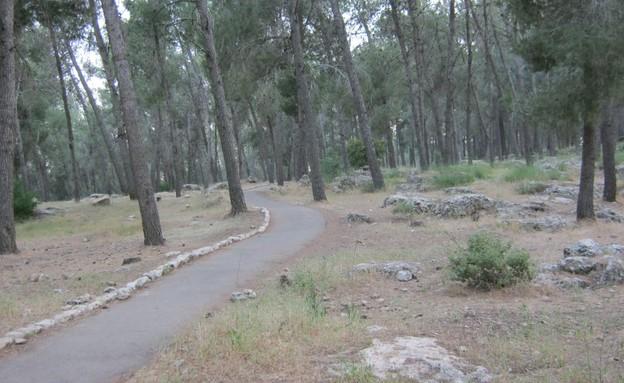 יער עמינדב (צילום: יחסי ציבור, ויקיפדיה)