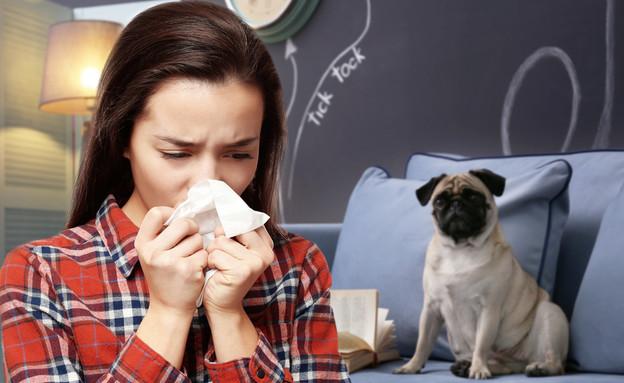 אלרגיה לכלבים (צילום: By Dafna A.meron, shutterstock)