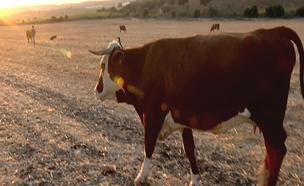 החקלאים שמתמודדים עם פריצות ומעשי אלימות (צילום: חדשות 2)