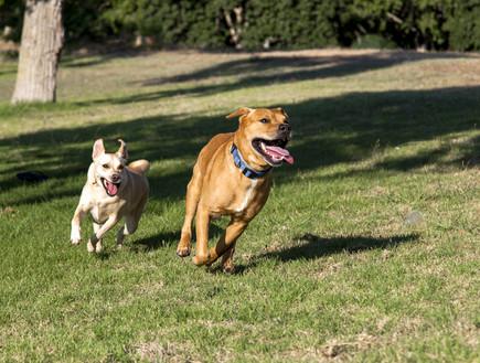 כלבים משחקים בפארק