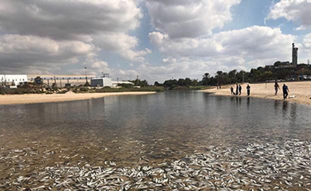 זיהום בנחל לכיש (צילום: דוברות עיריית אשדוד)