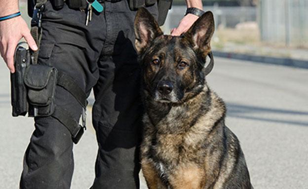 חשד: שוטר הכניס כלב תקיפה לחדר החקירות (צילום: 123 rf)
