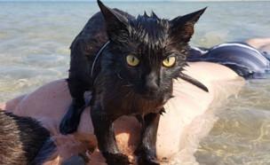 החתולה נתן (צילום: יחסי ציבור)
