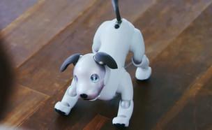 הכלב-רובוט החדש של סוני (תמונת AVI: סוני, יוטיוב)