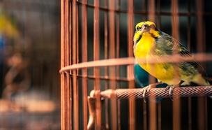 כלוב, ציפור (צילום: 123RF)