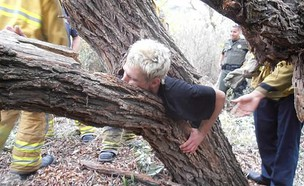 עצים מטורללים (צילום: ספליטפיקס)