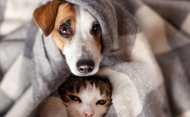 כלב וחתול מתחממים (צילום: kateafter   Shutterstock.com )