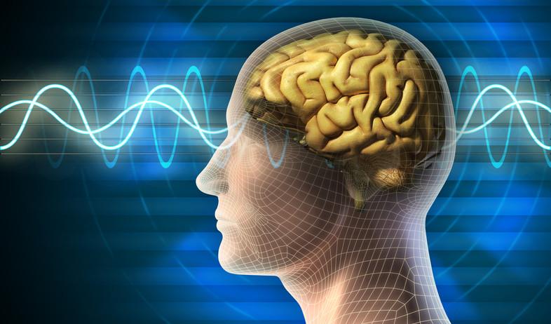 גלי מוח (צילום: ShutterStock)