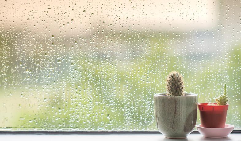 אשה מנקה חלון (צילום: shutterstock)