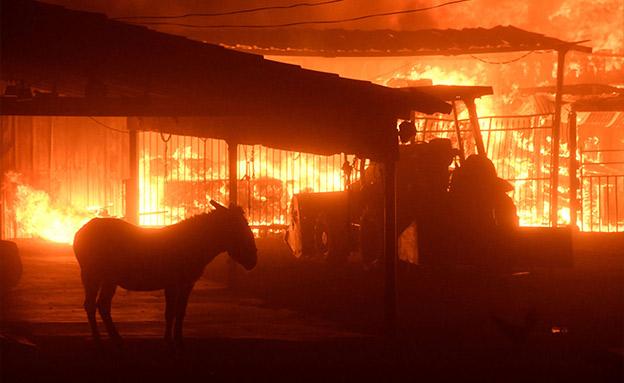 שריפות ענק בקליפורניה (צילום: Sky News)