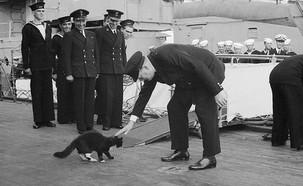 החתול סם על הסיפון