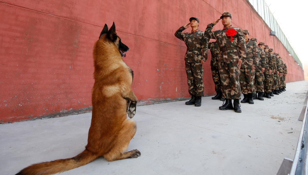 כלב וחיילים