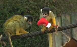 צפו: חג המולד בגן החיות בלונדון (צילום: רויטרס)