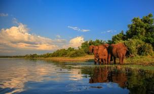הפארק הלאומי קרוגר, אפריקה (צילום: JMx , shutterstock)