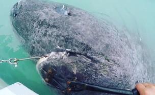 כריש קשיש (צילום: אינסטגרם/juniel85)