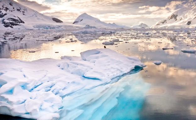 אנטארקטיקה (צילום: שאטרסטוק/ויקיפדיה Wim Hoek )
