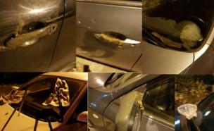 מכוניות מרוחות בצואה בתל אביב (צילום: צילום ביתי)
