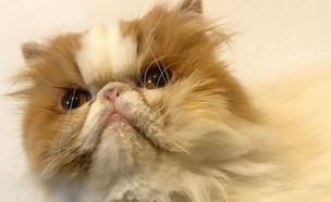 אסתר החתולה (צילום: ניר סלונים)