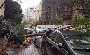 קריסת עצים ברמת גן (צילום: דוברות המשטרה)