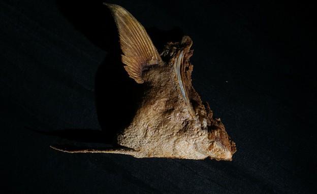 פסקדו - כנף מוסר (צילום: גל זהבי, יחסי ציבור)