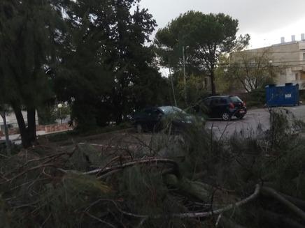 עץ שקרס בבית אל, הבוקר