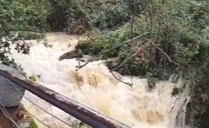 צפו: אחרי הגשמים, זרימות בנחלים (צילום: החדשות)