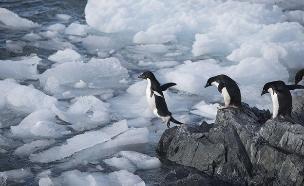 צפו בסרטון שצילם צוות המשימה (צילום: Christian Åslund / Greenpeace)