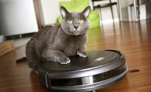 חתול יושב על שואב אבק רובוטי (צילום: By Photo Spirit, shutterstock)