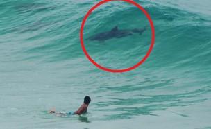 כריש או דולפין? (צילום: Facebook/7 News Brisbane)