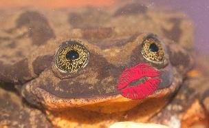 צפו בקמפיין הרומנטי של הצפרדע (צילום: global wild life conservation)