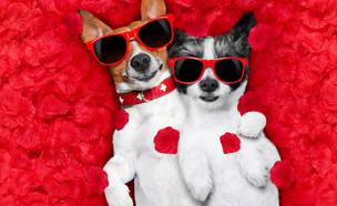 6 דברים שלא ידעתם על אהבה ובעלי חיים (צילום: Shutterstock)