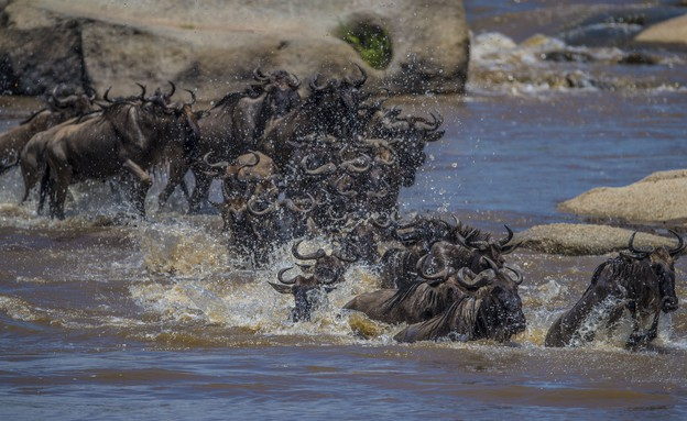 אפריקה (צילום: עמוס נחום)