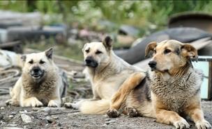 """הותקפה ע""""י 10 כלבים, אילוסטרציה (צילום: fosterss, 123RF)"""