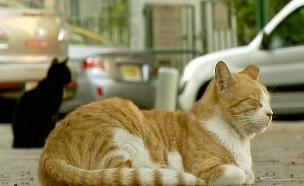 צד חתולים ואכל אותם (צילום: חדשות 2)
